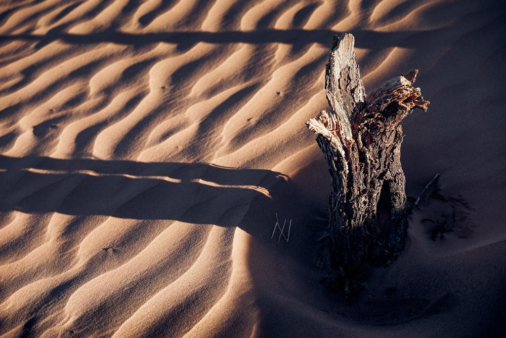 flore désert Maroc