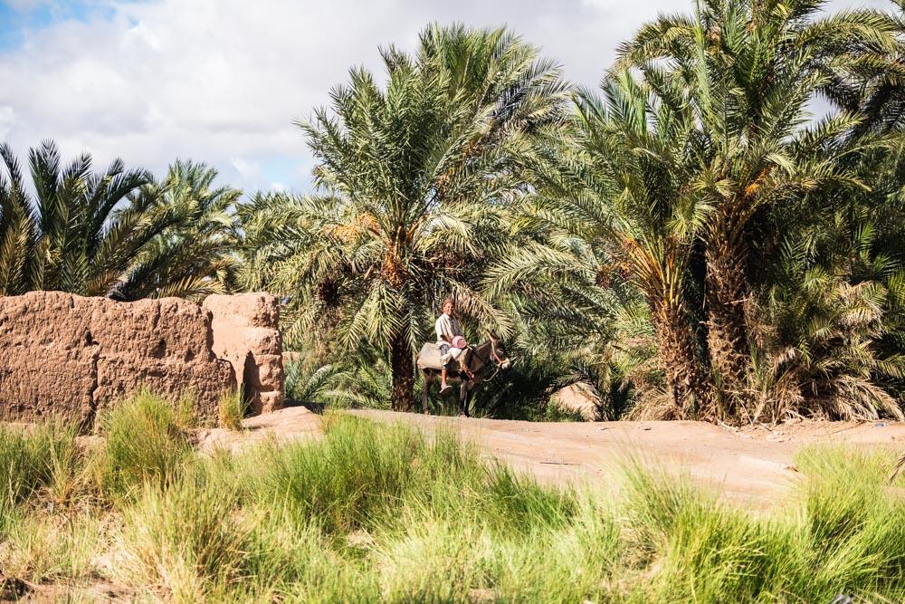 Paysan marocain