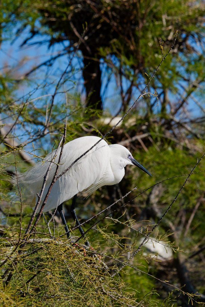 parc ornithologique pont de gau