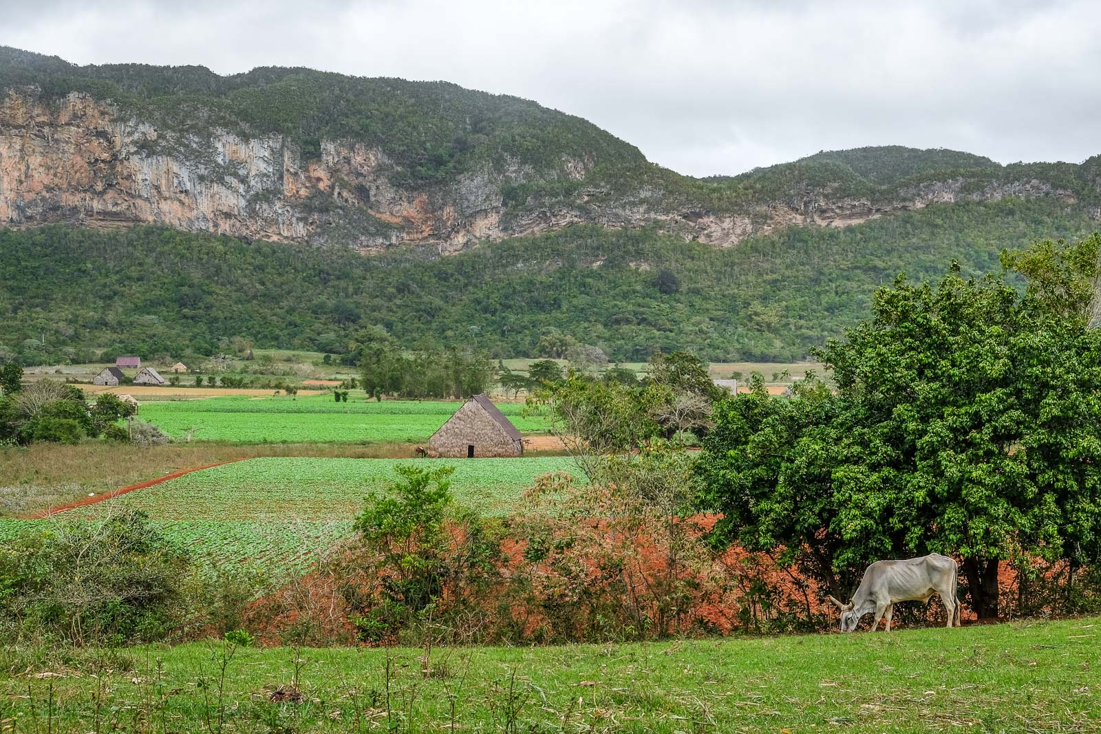 La vallée de Viñales