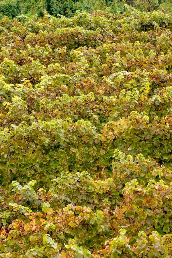 vin de Bellet Nice
