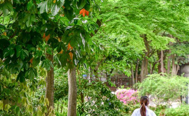Visiter Tokyo : les quartiers immanquables et guide pratique