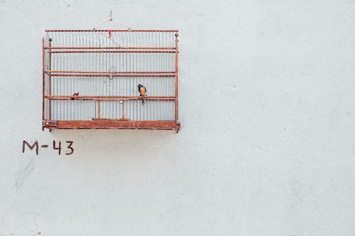 cage oiseau trinidad