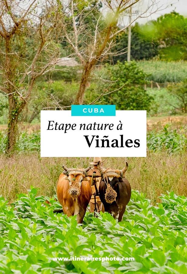 pinterest visiter viñales