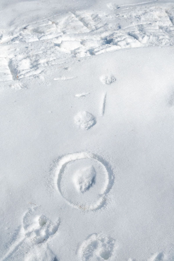 traces animaux neige