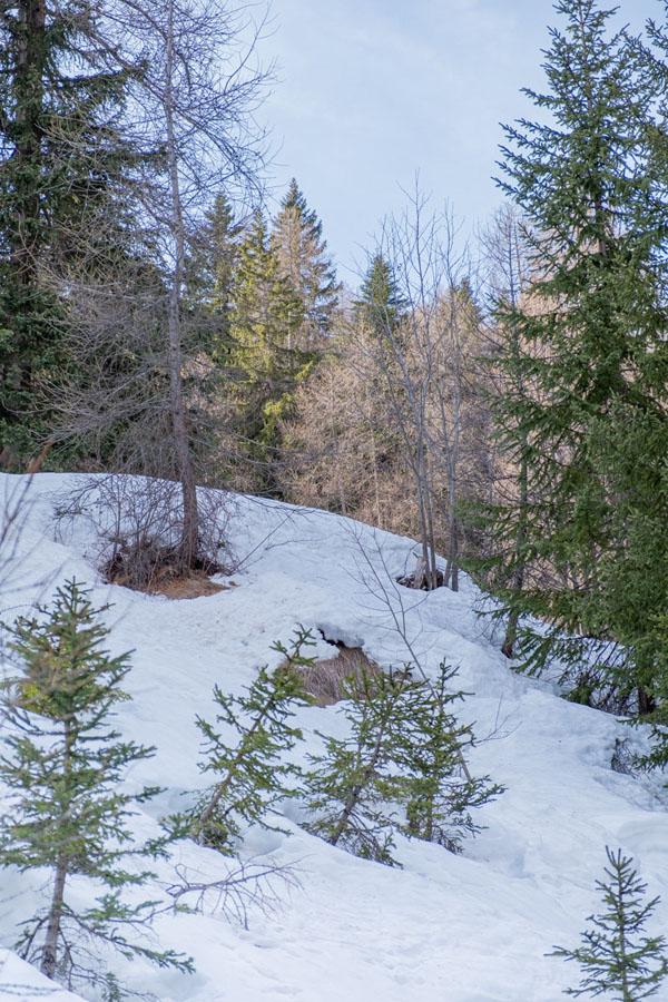 végétation parc naturel mercantour