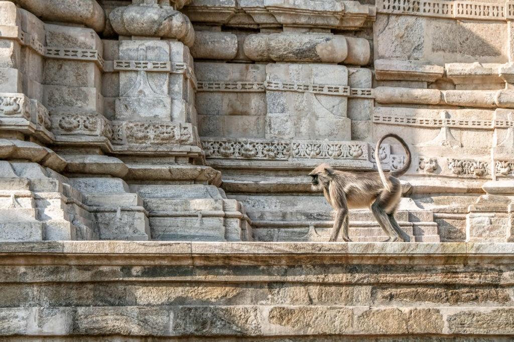 temple ranakpur