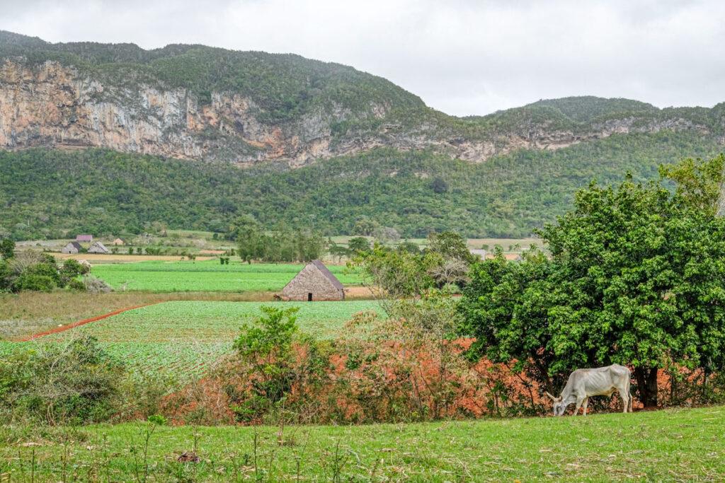 paysage vallée viñales